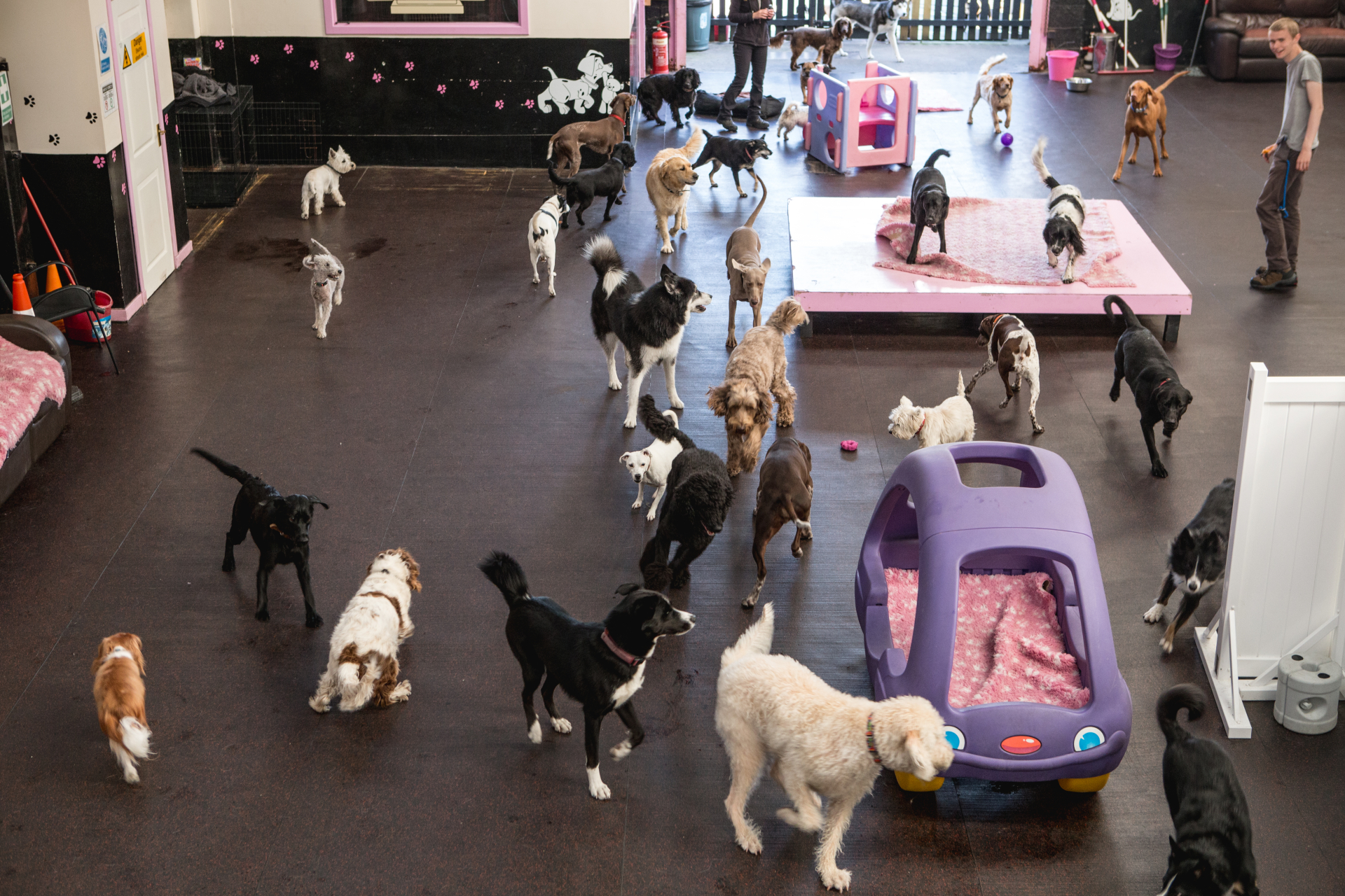 Dog day care business plan to buy uk with safe paws for What is dog boarding